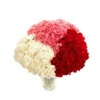 Red Pink And White Carnations
