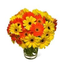 Circus of Gerberas Bouquet