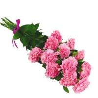 Long Stem Pink Carnations
