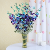 Adorable Blue Orchid in Glass Vase