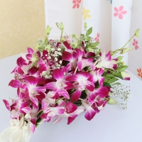 Purple Orchids Bunch with Cellophane Wrapping