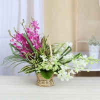 Attractive white & purple orchids