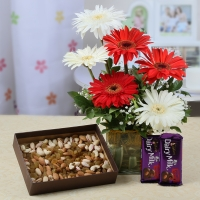 Gerberas Vase Dry Fruits and Chocolates Combo